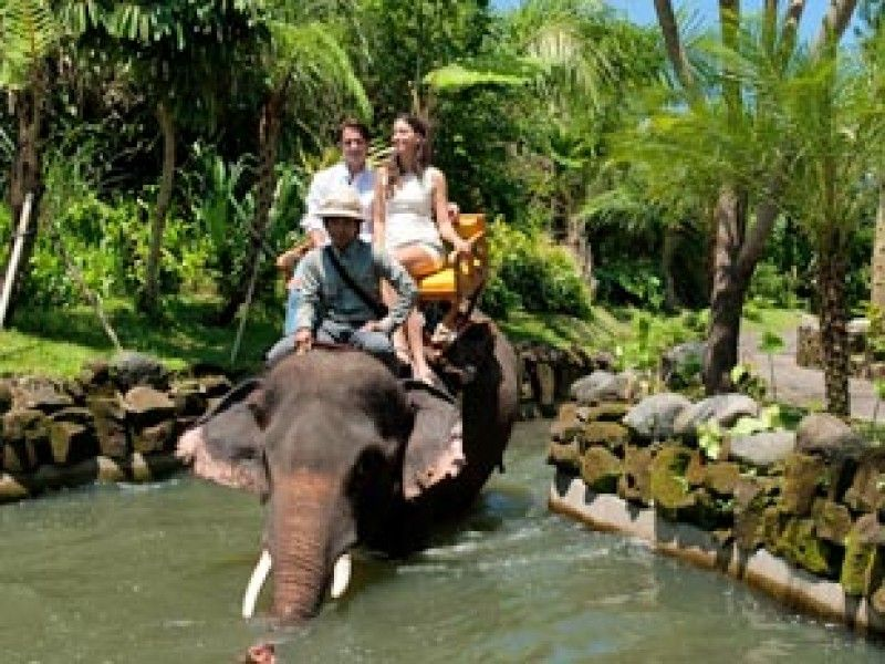 Bali Zoo | Short Elephant Expedition