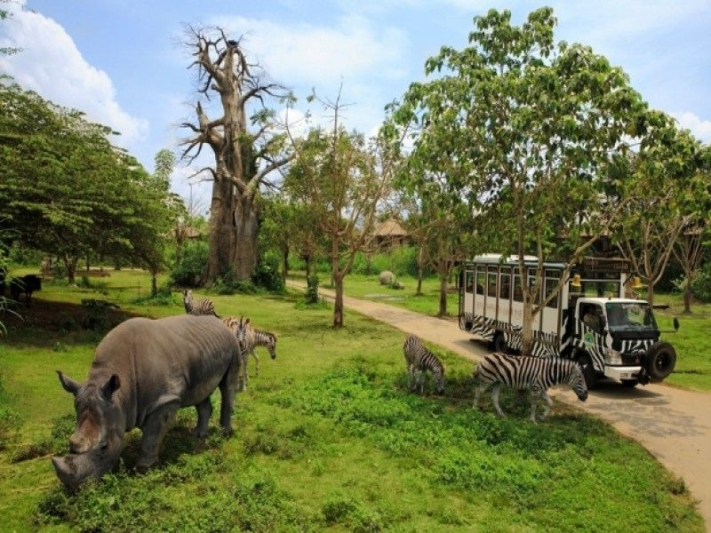 Bali Safari Marine Park | Rhino Package