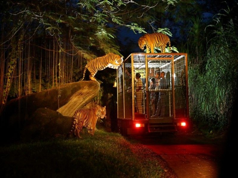 Bali Safari Park | Night Safari