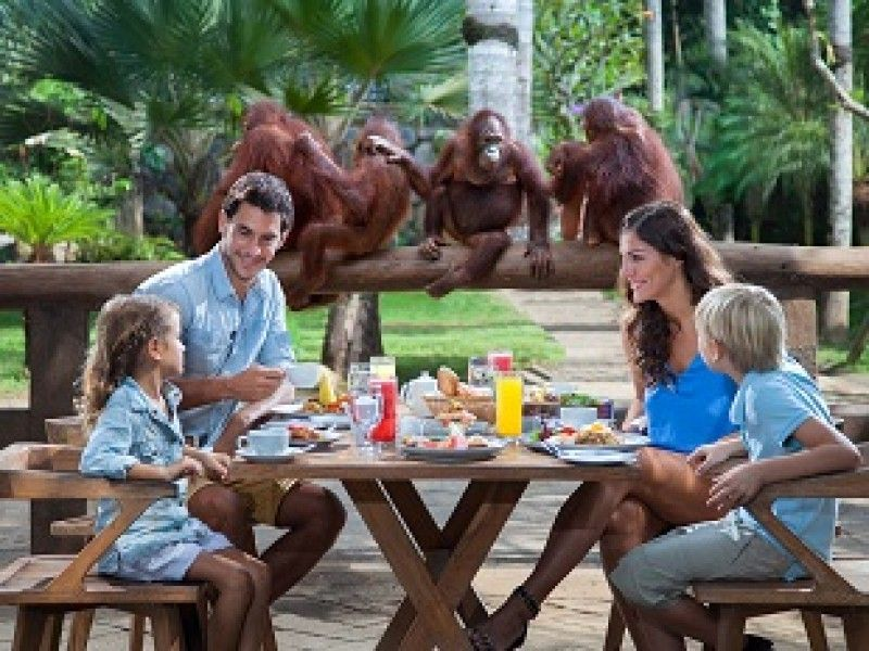 Bali Zoo | Breakfast With Orangutan