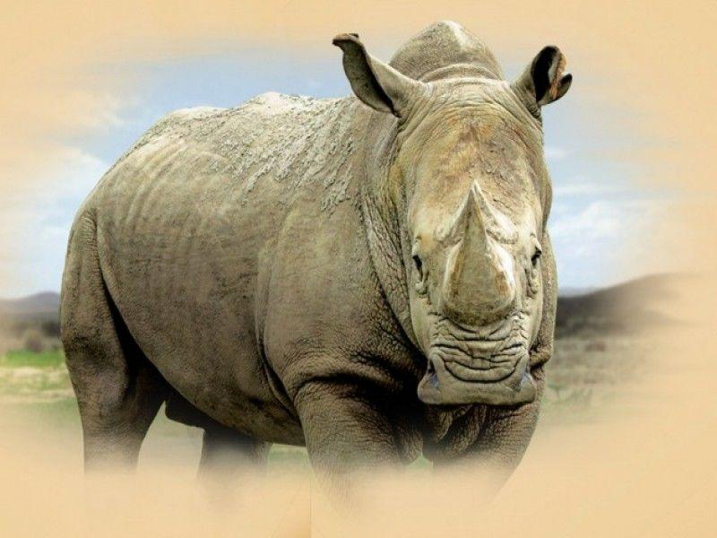 Bali Safari Park | Rhino Package