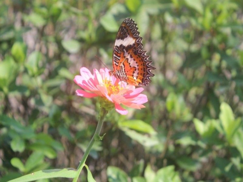 Butterfly Park Bali | Entrance Fee