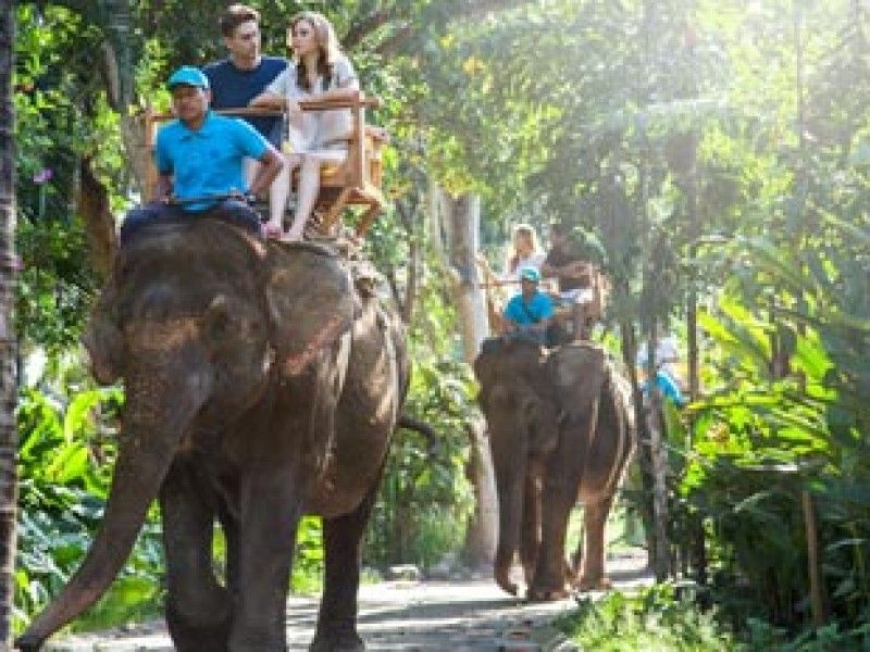 Bali Zoo | Elephant Ride Expedition