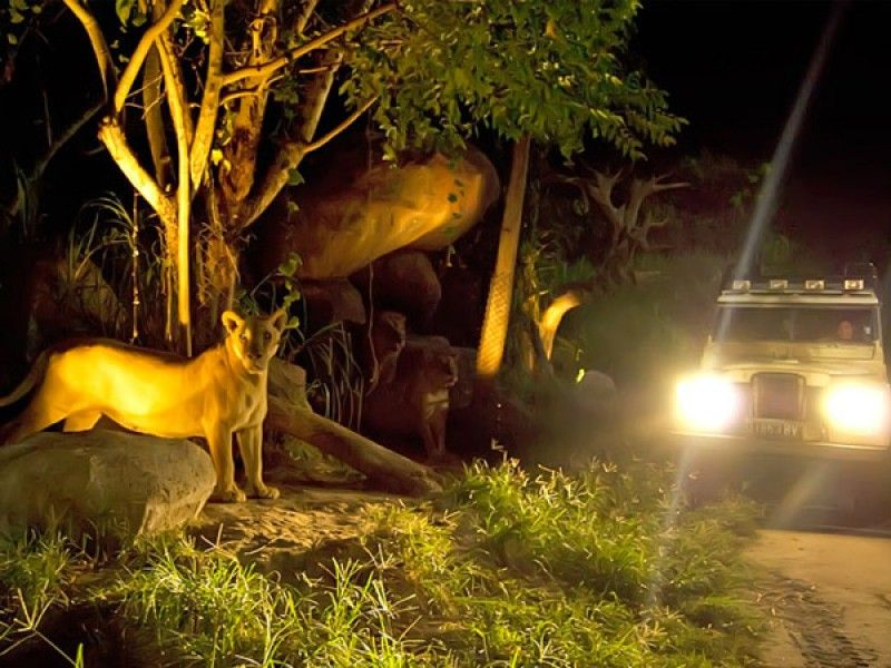 Bali Safari Marine Park | Night Safari